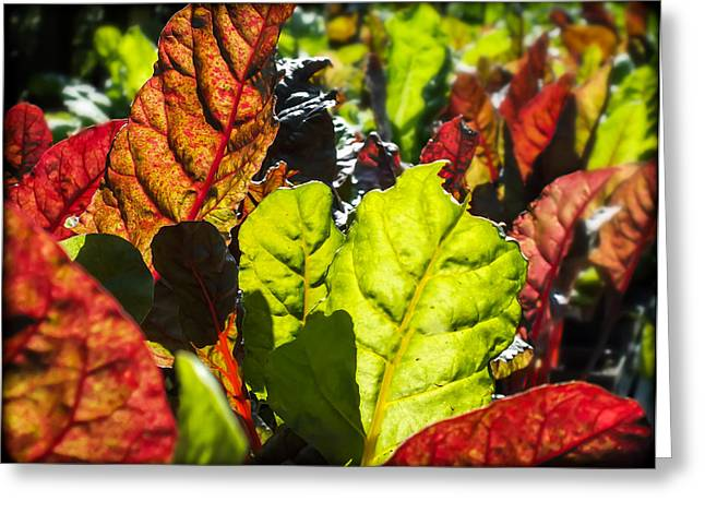 Health Food Photographs Greeting Cards - Wild Lettuce Greeting Card by Karen Wiles