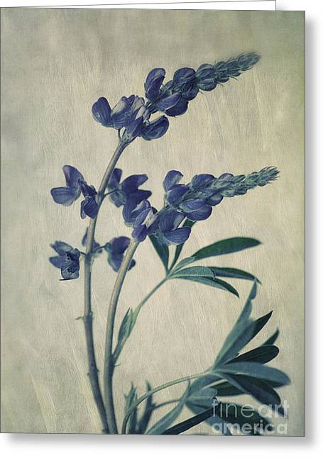 Flora Photo Greeting Cards - Wild Lupine Greeting Card by Priska Wettstein