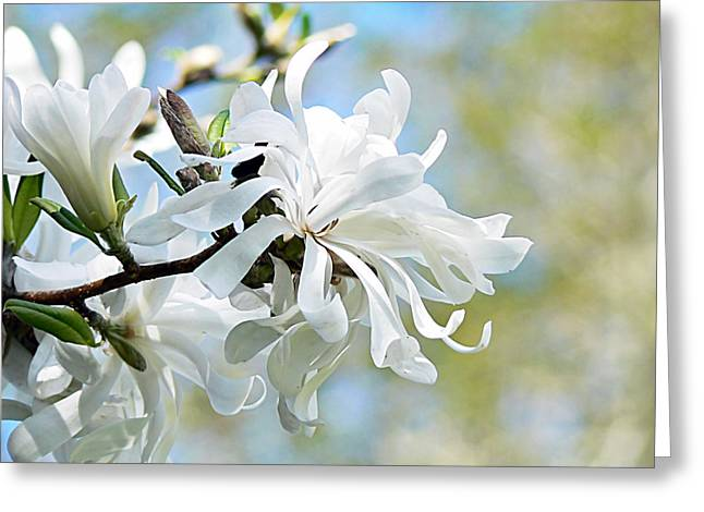 Wild Magnolia Blooms Greeting Card by Pamela Patch