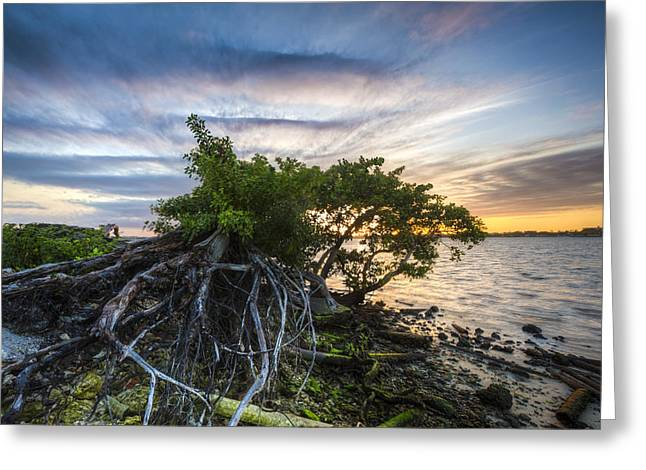 Tree Reflection At Sunset Greeting Cards - Wild Mangroves Greeting Card by Debra and Dave Vanderlaan