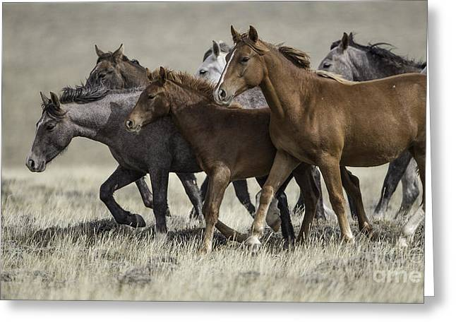 Adobe Wells Greeting Cards - Wild Mares and Foals Greeting Card by Carol Walker