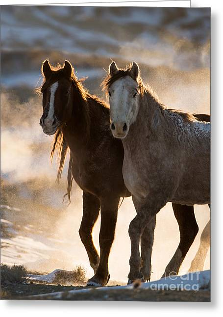 Wild Horses Greeting Cards - Wild Mares Released Greeting Card by Carol Walker