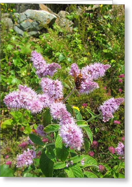 Levis Greeting Cards - Wild Mint With Honey Bee Greeting Card by Natalia Levis-Fox