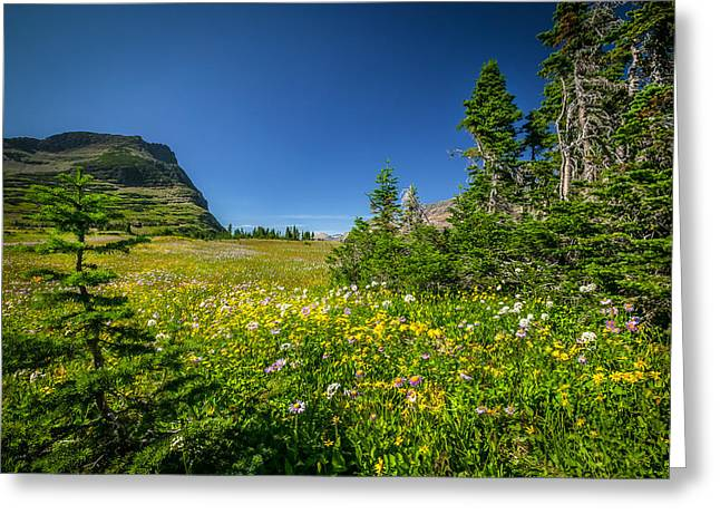 Abstracted Coneflowers Photographs Greeting Cards - Wild Mountain Flowers Glacier National Park   Greeting Card by Rich Franco