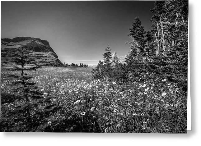 Wild Mountain Flowers Glacier National Park Greeting Card by Rich Franco