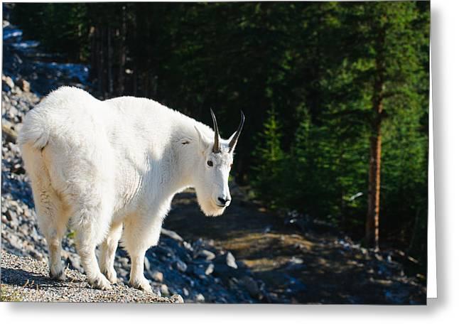 Brandon Smith Greeting Cards - Wild Mountain Goat Greeting Card by Brandon Smith