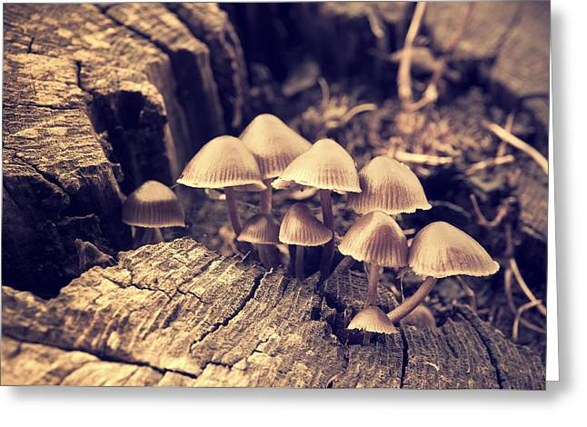 Toadstools Photographs Greeting Cards - Wild Mushrooms Greeting Card by Amanda And Christopher Elwell