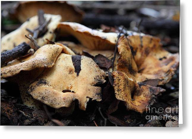 Wild Mushrooms On The Forest Floor - 5d21078 Greeting Card by Wingsdomain Art and Photography