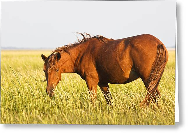Wild Mustand on the Tidal Flats Greeting Card by Bob Decker