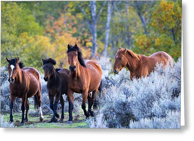 Wild Horse Greeting Cards - Wild Mustang Autumn Greeting Card by Mike Dawson