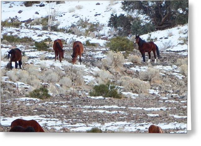 Print Photographs Greeting Cards - Wild Mustangs in a Nevada Winter Greeting Card by Bobbee Rickard
