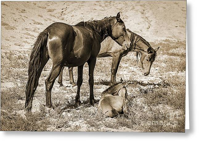 The Horse Greeting Cards - Wild Mustangs of the West Greeting Card by Janice Rae Pariza