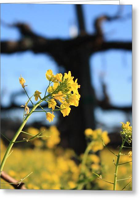 Warm Tones Greeting Cards - Wild Mustard 2 Greeting Card by Penelope Moore