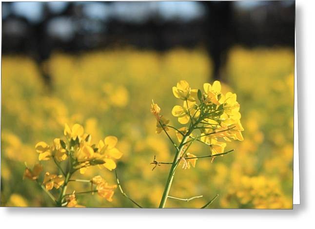 Warm Tones Greeting Cards - Wild Mustard 3 Greeting Card by Penelope Moore