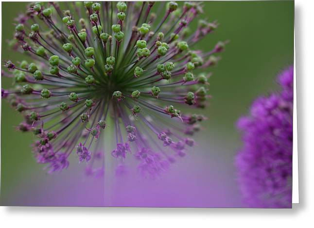 Wild Onion Greeting Card by Heiko Koehrer-Wagner