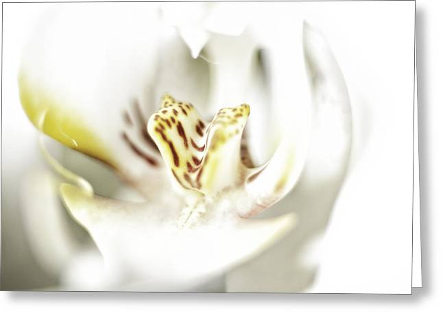 Wild Orchid Greeting Card by Erik Brede