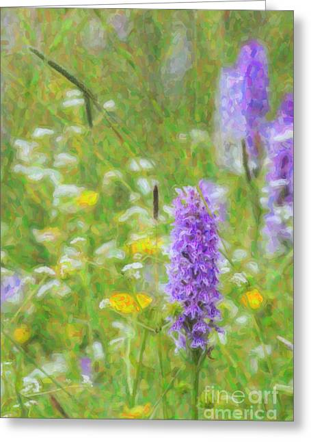 Purple. Wild Orchid Greeting Cards - Wild Orchid Watercolour  Greeting Card by Tim Gainey