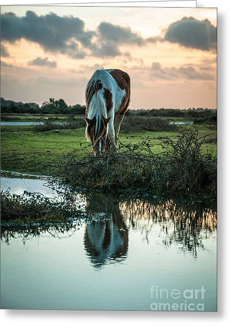 Puddle Paint Greeting Cards - Wild paint horse at The New Forest England Greeting Card by Li Kim Goh
