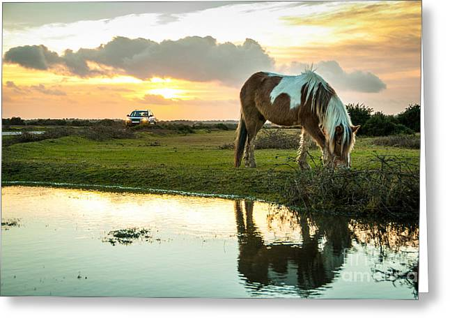 Puddle Paint Greeting Cards - Wild paint horse at The New Forest Sunset Greeting Card by Li Kim Goh