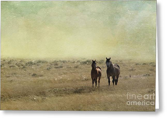 Wild Horse Greeting Cards - Wild Pair Greeting Card by Juli Scalzi