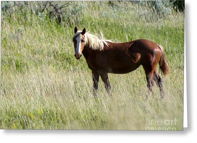 Wild Palomino Greeting Card by Sabrina L Ryan