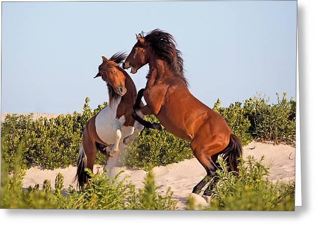 Pairs Greeting Cards - Wild Ponies Fighting Greeting Card by Jack Nevitt