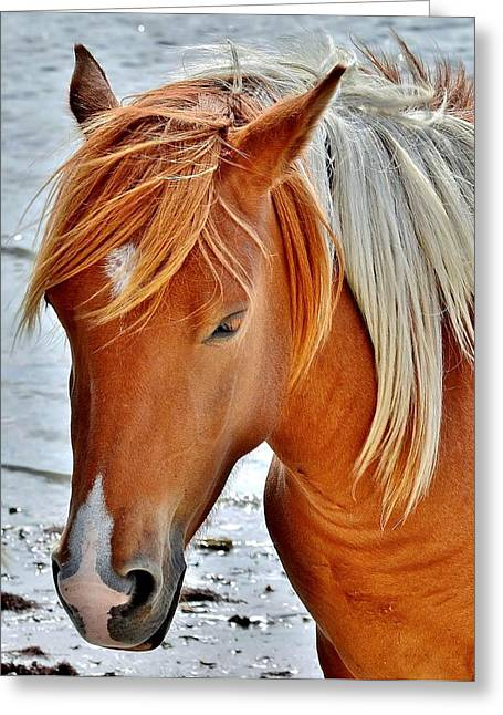 Beach Scene Greeting Cards - Wild Ponies of Assateague Series - 5 Greeting Card by Kim Bemis