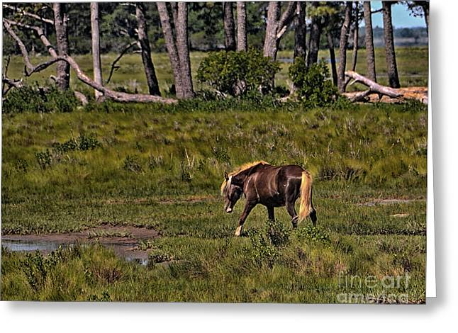 Wildlife Art Acrylic Prints Greeting Cards - Wild Pony on Assateague Island Greeting Card by Gerlinde Keating - Keating Associates Inc