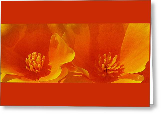 Tangerine Greeting Cards - Wild Poppies Greeting Card by Ben and Raisa Gertsberg