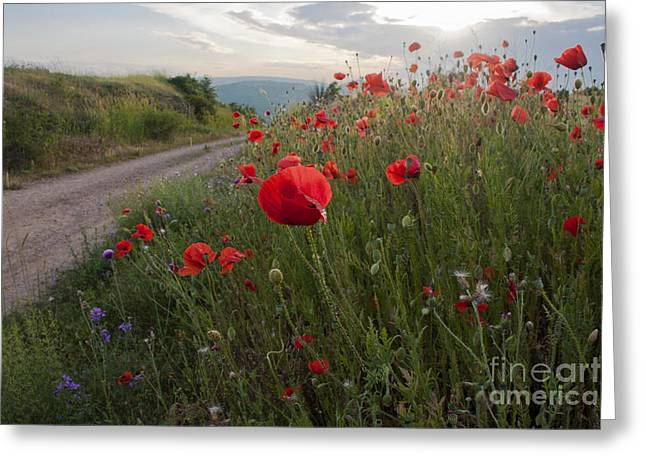 Corn Field Pyrography Greeting Cards - Wild Poppies by the roadside Greeting Card by Vasili Yurkevitch