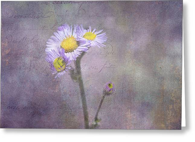 Purple Aster Greeting Cards - Wild Purple Aster  Greeting Card by Betty  Pauwels