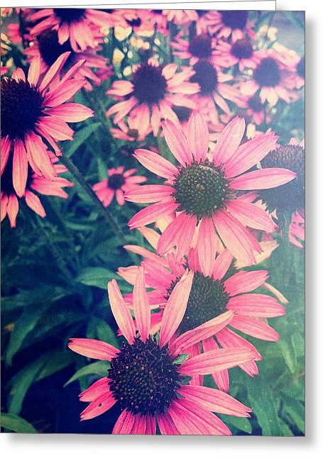 Joy Stclaire Greeting Cards - Wild Purple Coneflowers Greeting Card by Joy StClaire