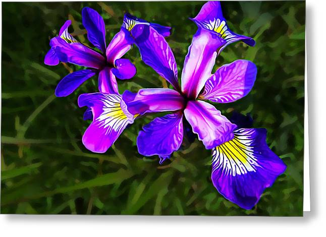 Modern Photographs Greeting Cards - Wild Purple Iris Greeting Card by Bill Caldwell -        ABeautifulSky Photography