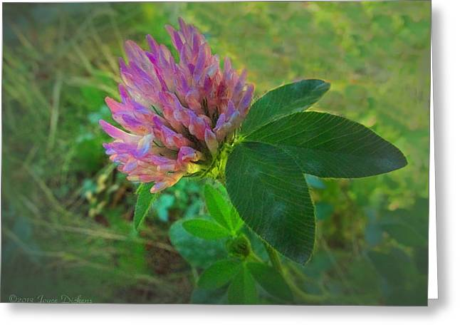 Spacial Greeting Cards - Wild red Clover Blossom Greeting Card by Joyce Dickens