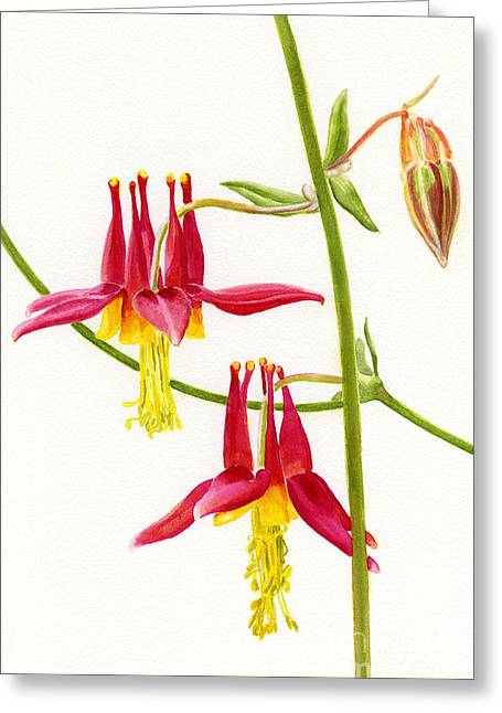 Columbine Greeting Cards - Wild Red Columbine Blossoms Greeting Card by Sharon Freeman