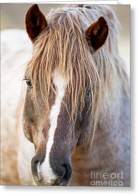 Wild Horses Greeting Cards - Wild Red Roan Stallion Comes Close Greeting Card by Carol Walker
