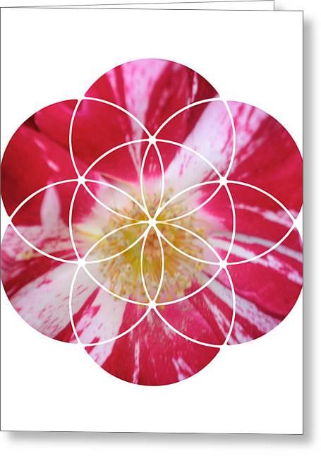Sacred Geometry Greeting Cards - Wild Rose Greeting Card by Sacred Geometry