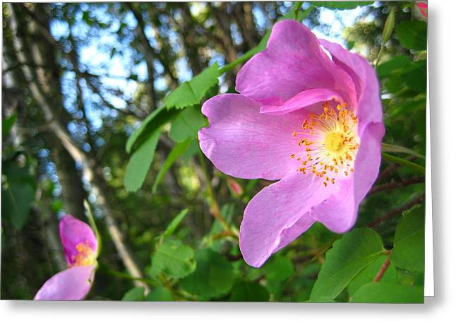 Light Grey Greeting Cards - Wild Rose Greeting Card by Shirley Sirois