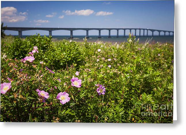 Northumberland Greeting Cards - Wild roses at Confederation Bridge Greeting Card by Elena Elisseeva