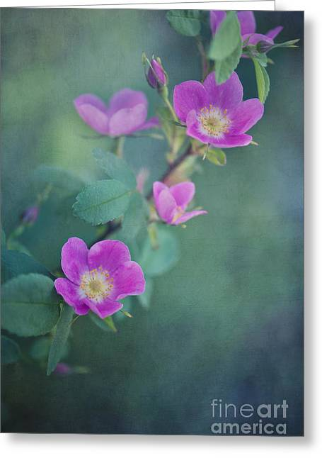 Scented Greeting Cards - Wild Roses Greeting Card by Priska Wettstein