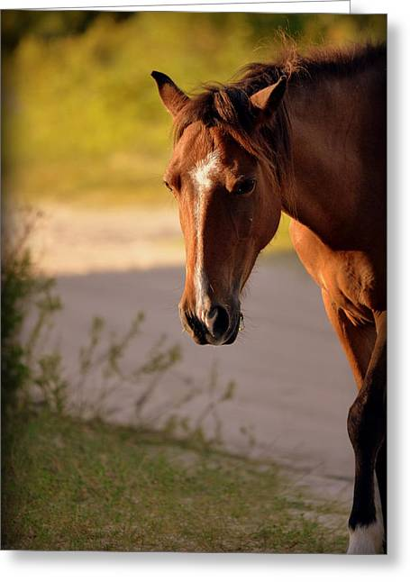 Brown Horse Photographs Greeting Cards - Wild Shadows Greeting Card by Amanda Vouglas
