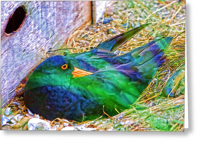 Dry Wood Greeting Cards - Wild Sketch of Bird Greeting Card by Linda Phelps