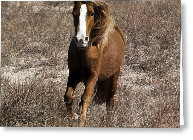 Feral Greeting Cards - Wild Spirit Greeting Card by Betsy C  Knapp