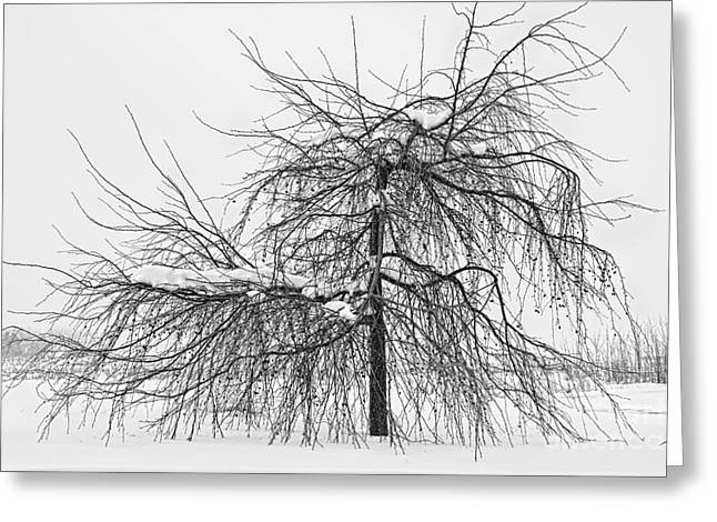 Snow Tree Prints Greeting Cards - Wild Springtime Winter Tree Black and White Greeting Card by James BO  Insogna