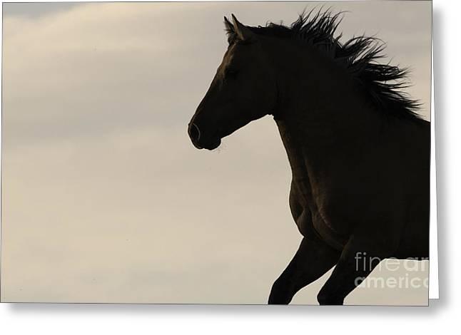 Pryor Greeting Cards - Wild Stallion Runs at Sunrise Greeting Card by Carol Walker