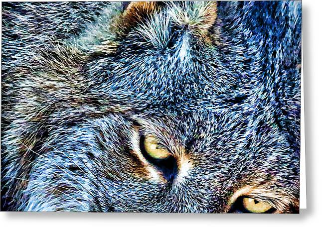Bobcats Photographs Greeting Cards - Wild Greeting Card by Steve McKinzie