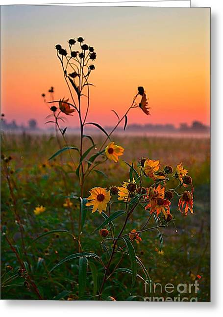 Julie Dant Greeting Cards - Wild Sunflowers at Dawn Greeting Card by Julie Dant