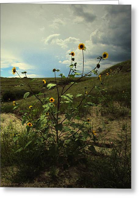Flowers Direct Greeting Cards - Wild Sunflowers At Paint Mines Greeting Card by Joyce Dickens