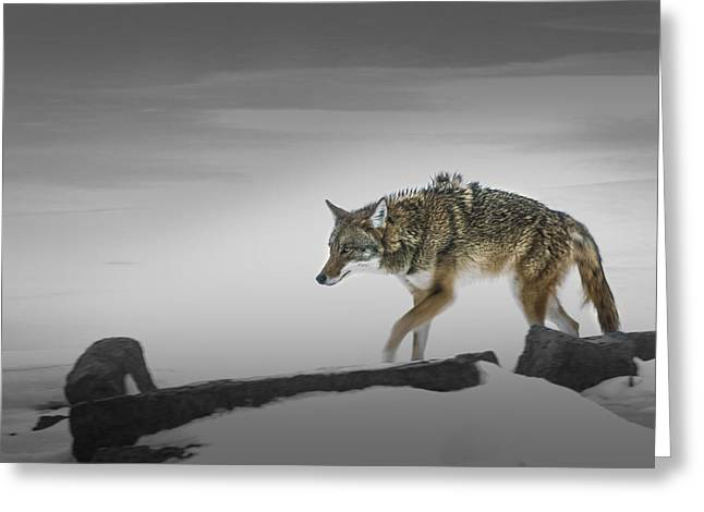 Brush Wolf Greeting Cards - Wild Thang Greeting Card by Peter Scott