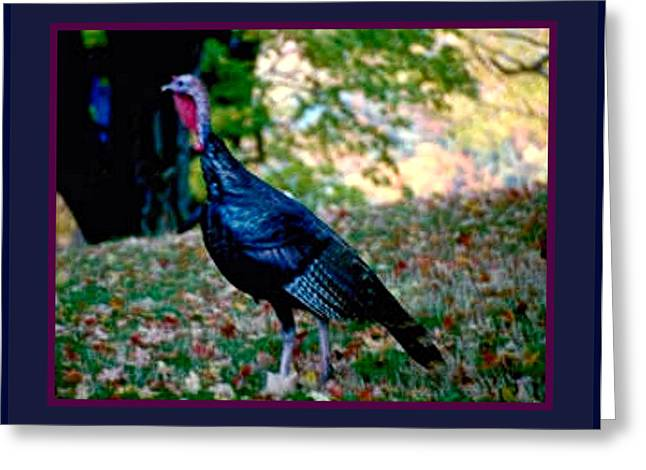 18th Century Mixed Media Greeting Cards - Wild Tom Turkey Greeting Card by L Brown